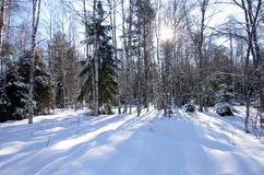 Winter landscapes in the forest. On a sunny and cold morning in Dalarna,Sweden royalty free stock photography