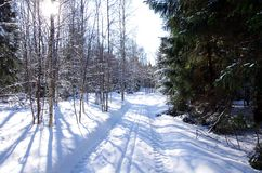 Winter landscapes in the forest. On a sunny and cold morning in Dalarna,Sweden royalty free stock image
