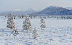 Winter landscape of Oymyakon.  Yakutia, Russia. Winter landscapes of Oymyakon - the pole of cold of the Northern Hemisphere. Yakutia, Russia royalty free stock image