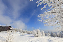 Winter landscapes with snow Royalty Free Stock Image