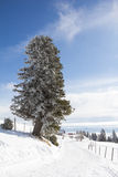 Winter-Landschaft an Mt Dobratsch Stockbild