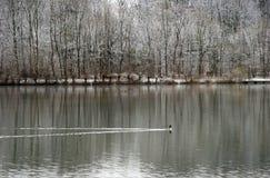Winter-Landschaft - Schnee deckte die Bäume ab, die in einem See sich reflektieren Lizenzfreie Stockfotos