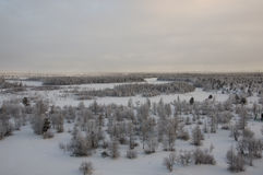 Winter landskape with forest in snow in the evening sunset. North.  Stock Photo