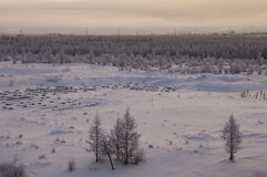 Winter landskape with forest in snow in the evening sunset. North.  Royalty Free Stock Images