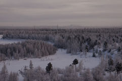 Winter landskape with forest in snow in the night. North.  Royalty Free Stock Image