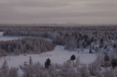 Winter landskape with forest in snow in the night. North.  Stock Photo