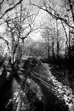Winter Lane. Tree lined lane on a winter's day Royalty Free Stock Photography