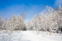 Winter lane Royalty Free Stock Photo