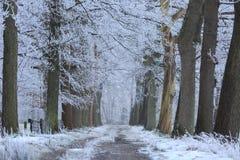 Winter lane Royalty Free Stock Images
