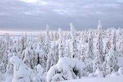Winter lanscape Royalty Free Stock Photo