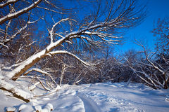 Winter lanscape Stock Photo