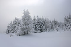 Winter lanscape. Winter landscape with snowy tree, fog and mist royalty free stock image