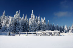 Winter lanscape. Winter landscape with snowy tree and a fence royalty free stock image