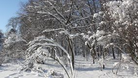 Winter lanscape stock video footage