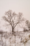 Winter landscape tree royalty free stock photo