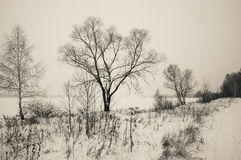 Winter landscape tree Stock Photo