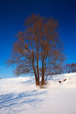 Winter lanscape with trees Stock Image