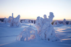Winter in Lapland Finland Royalty Free Stock Photo