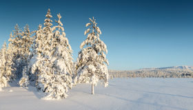 Winter at Lapland Royalty Free Stock Photos
