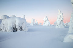 Winter at Lapland. Winterwonderland at lapland Finland trees covered with snow and a sunset Stock Photo