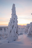 Winter at Lapland Stock Photography
