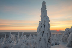 Winter at Lapland Royalty Free Stock Photo