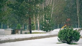 In winter the large flakes falling snow stock video