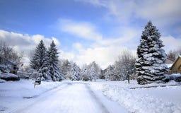Winter-Laufwerk Lizenzfreie Stockfotografie