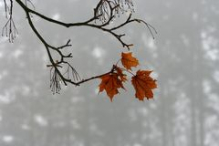 Winter leaf Royalty Free Stock Photo
