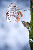 Winter leaf Royalty Free Stock Image