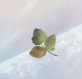 Winter leaf. Flying leaf in a cold winter sky Stock Images