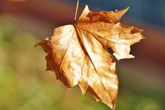 Winter Leaf Stock Image