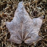 Winter Leaf Royalty Free Stock Photos