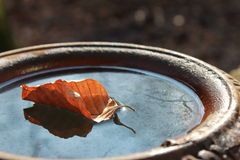 Winter leaf in a jug Royalty Free Stock Photography