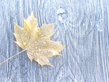 Winter Leaf Stock Photography