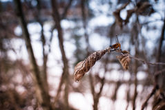 Winter leave Stock Photography