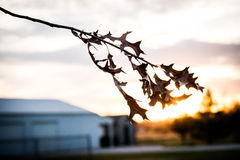 Winter leave and sunset in the winter time Royalty Free Stock Photography