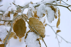 Winter leaves Royalty Free Stock Photos