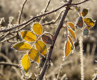 Winter leaves Royalty Free Stock Photo