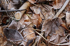 Winter leaves. Autumn leaves royalty free stock images