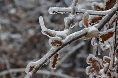 Winter 54 Royalty Free Stock Image