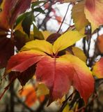 Winter Leaves Royalty Free Stock Images