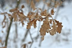 Winter leaves stock photography
