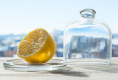 Winter lemon. Royalty Free Stock Photography