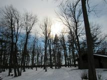 Winter at Letchworth Park. Winter walk in the state park of New York Stock Photography