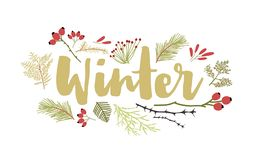 Winter lettering handwritten with cursive calligraphic font and decorated by coniferous tree branches and berries. Decorative seasonal composition. Flat vector illustration