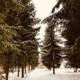 Winter Lettland stockfoto
