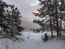 Winter in Lettland lizenzfreies stockbild