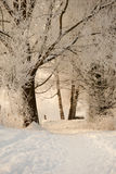 Winter light. Snowy landscape with a little bit sunlight royalty free stock image