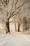 Winter light. Snowy landscape with a little bit sunlight Royalty Free Stock Image